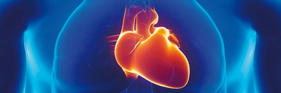 Der Herz-Kreislauf bei Männern